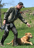 dog-training-feature