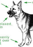 dog-body-language-feature