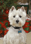 dog-christmas-feature