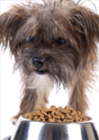dog-food-aggression-feature
