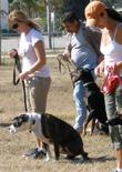 dog-training-classes-feature