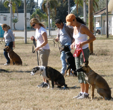 dog-training-classes