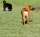A Dog Park is Fun, but is it Safe?