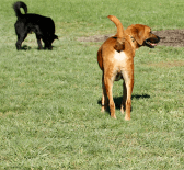 dog_parks_feature