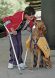 service-dogs-feature