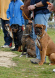 dog-training-schools-feature