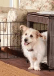 dog-crate-training-feature