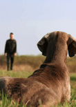 obedience-training-for-dogs-feature