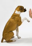 best-dog-training-feature