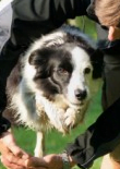 how-to-train-a-border-collie-feature