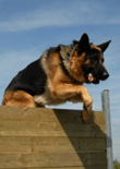 how-to-train-a-german-shepherd-feature