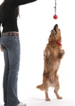 basic-dog-training-feature