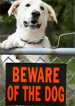 dog-aggression-training-feature