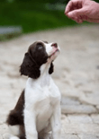 dog-training-advice-feature