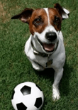 dog-training-games-feature