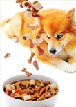 dog-training-treats-feature
