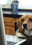 online-dog-training-feature