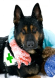 search-and-rescue-dog-training-feature