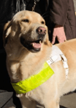 therapy-dog-training-feature