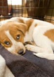 crate-training-puppies-feature
