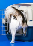 how-to-crate-train-a-puppy-feature