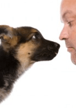 how-to-train-your-dog-feature