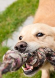 play-with-your-dog-feature