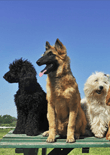 different-breeds-of-dogs-feature