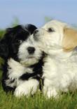 raising-a-puppy