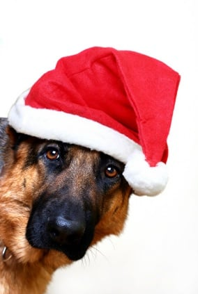 3 simple tips for a merry christmas with your dog