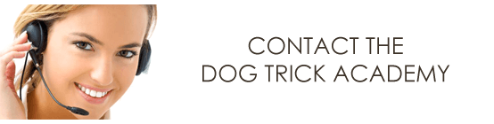contact_the_dog_trick_academy