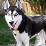 My dog Onyx posing