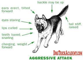 Dog Aggressive Stance