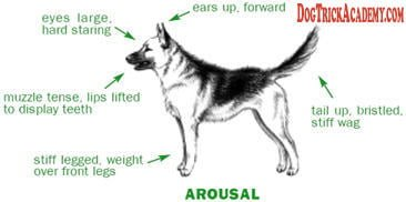 Dog Arousal Stance