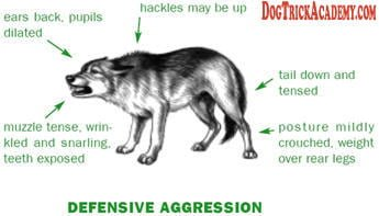 Dog Defensive Aggression Stance