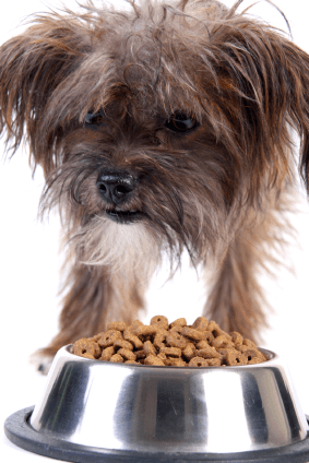 dog_food-aggression