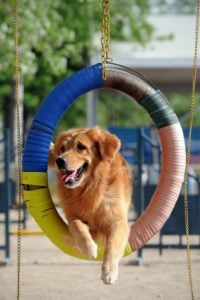 How To Train A Golden Retriever With Kindness Dog Trick Academy